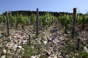 chablis-grand-cru-les-clos-soil-257